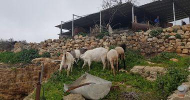 يانون… قصة قرية فلسطينية صامدة
