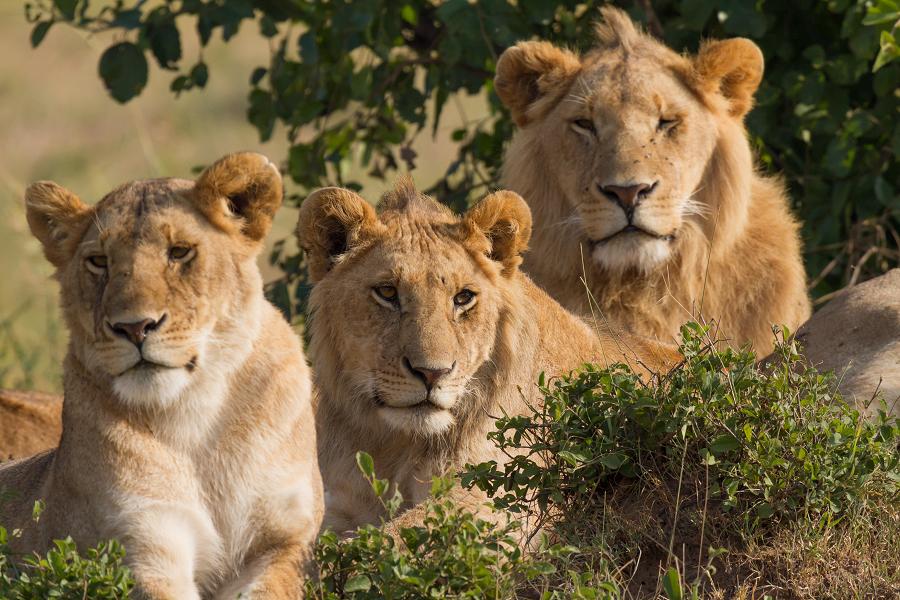 أخلاقيات القتال في عالم الحيوان…هل تلهمنا لأنسنة الصراعات المسلحة عند البشر؟