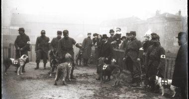 Les chiens de la Croix-Rouge…