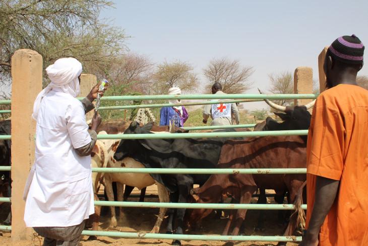 Niger : 3,5 millions d'animaux vaccinés pour renforcer la situation économique des éleveurs