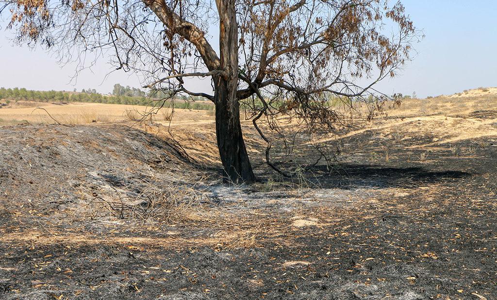 מירוק לשחור: בלוני התבערה מותירים את חקלאי עוטף עזה עם צלקות