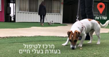 במרכז טיפול בעזרת בעלי חיים,  עוזרים לילדים להתמודד עם המציאות הביטחונית