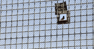 Separated: The humanitarian consequences of solitary confinement in detention