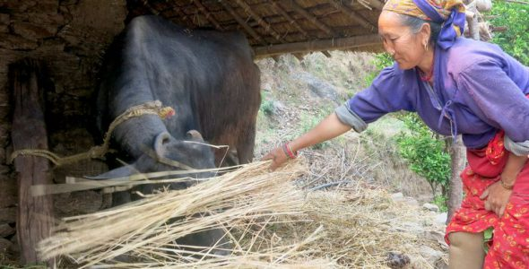 """""""I Will Come Back… More Confident"""" – Marmendu's Story Two Years On from Nepal Earthquake"""