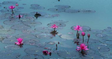 Daisaku Ikeda: Treasuring Every Individual