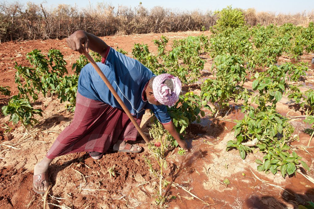 A farmer working on his farm in Bakol region, Somalia. ©ICRC/Pedram Yazdi
