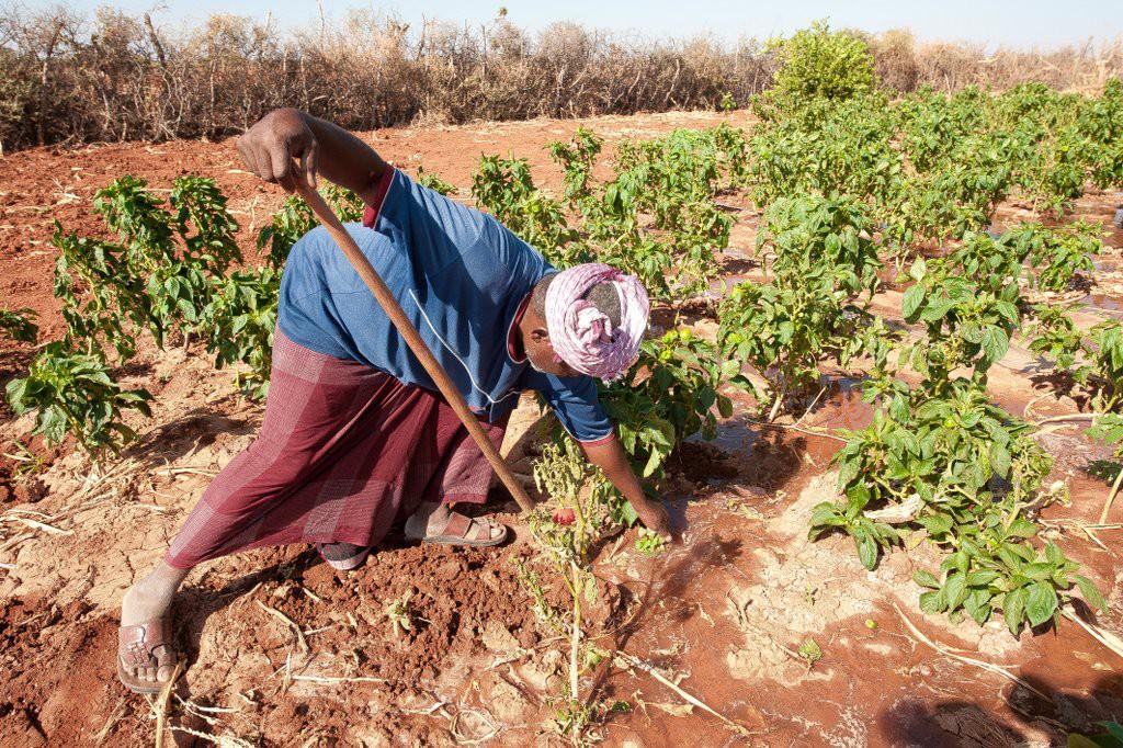 A farmer working on his farm in Bakol region, Somalia. ©ICRC/Pedram Yazdi