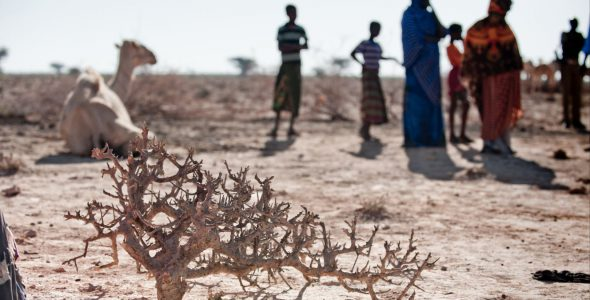 Somalia: Drought Emergency Response