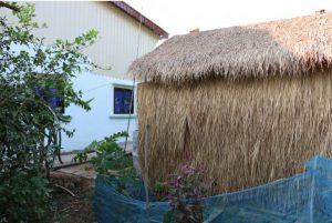 เลียมสร้างโรงเรือนปลูกเห้ดไว้ใกล้บ้านเธอซึ่งทำให้สะดวกในการดูแล