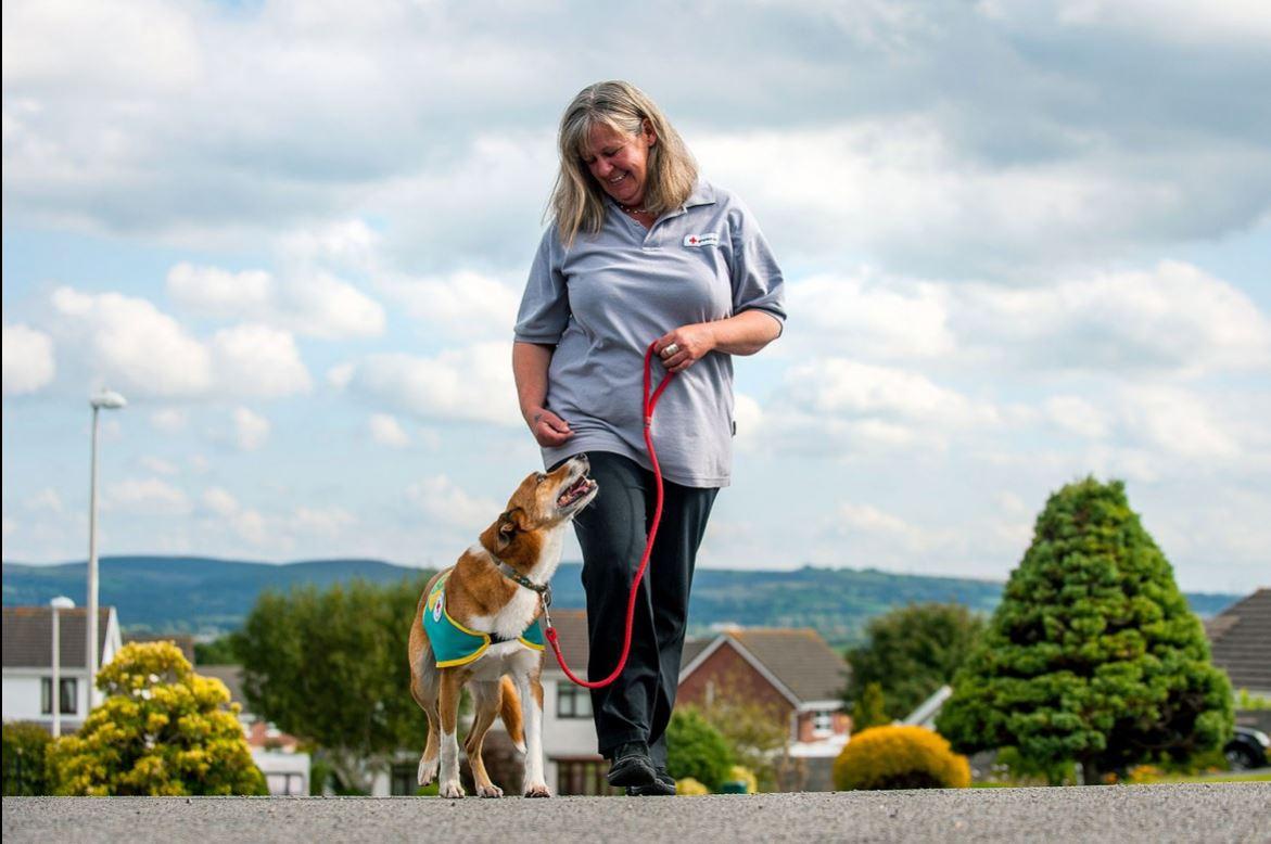 ซาร่าห์ ดิสนี่ย์และเจ้า TWM สุนัขที่ถูกฝึกมาเพื่อให้การบำบัดผู้ป่วย กำลังมุ่งหน้ากลับบ้านที่เมือง Carmarthenshire ในประเทศเวลส์ หลังจากไปเยี่ยมผู้ป่วยตามโครงการของสภากาชาดอังกฤษ โครงการ Camau Cadarn เป็นการช่วยให้ผู้ที่มีอาการซึมเศร้าหรือรู้สึกโดดเดี่ยวมีเพื่อนเป็นสัตว์เลี้ยงเช่นสุนัข