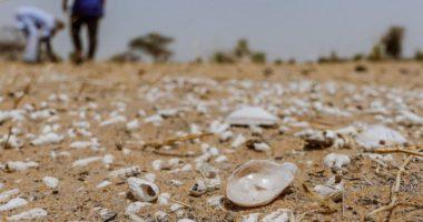 จากทะเลสาบเป็นทะเลทราย: การเปลี่ยนแปลงสภาพภูมิอากาศทำให้ประเทศมาลีเผชิญสภาวะวิกฤต